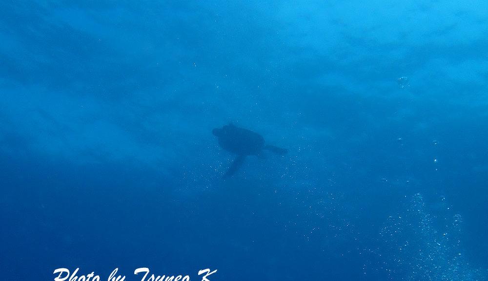 和歌山・串本の海5/14(金)『ウミガメに興奮!』